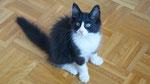 Apollon, 12 Wochen alt