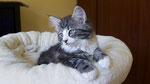 Cardamon, 11 Wochen alt