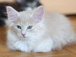 Jack Roger, 10 Wochen alt