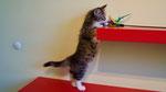 Foxy Brown, 10 Wochen alt