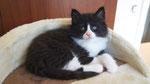 Apollon, 6 Wochen alt