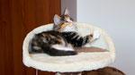 Artemis, 8 Wochen alt
