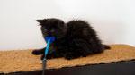 Ares, 9 Wochen alt
