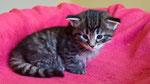 Davina, 3 Wochen alt