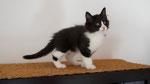 Apollon, 9 Wochen alt