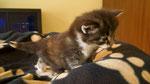 Joy Jumper, 3,5 Wochen alt