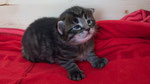 Cayenne, 2 Wochen alt