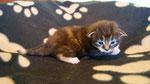 Joy Jumper, 2 Wochen alt