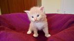 Ginkgo, 4 Wochen alt