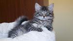 Cayenne, 11 Wochen alt