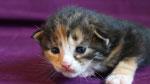 Artemis, 2 Wochen alt
