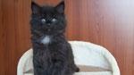 Ares, 7 Wochen alt