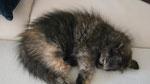 Athene, 10 Wochen alt