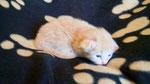 Jack Roger, 2 Wochen alt