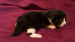 Apollon, 1 Woche alt