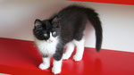 Apollon, 11 Wochen alt