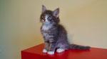 Glinus, 11 Wochen alt