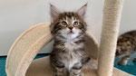 Kibo, 7 Wochen alt