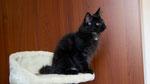 Ares, 12 Wochen alt