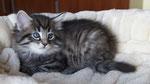 Cayenne, 6 Wochen alt