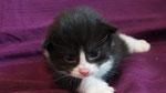 Apollon, 2 Wochen alt