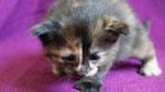 Athene, 3 Wochen alt