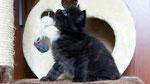 Ares, 5 Wochen alt