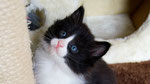 Apollon, 5 Wochen alt