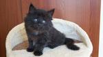 Ares, 6 Wochen alt