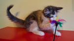 Grewia, 11 Wochen alt