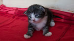 Cardamon, 2 Wochen alt