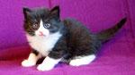 Apollon, 4 Wochen alt