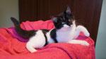 Emma (von der Alm), 14 Wochen alt