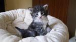 Cardamon, 4 Wochen alt