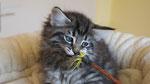 Cayenne, 9 Wochen alt