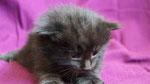 Ares, 3 Wochen alt