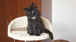 Ares, 8 Wochen alt