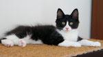 A-Wurf, 13 Wochen alt