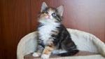 Artemis, 7 Wochen alt