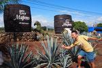 グアダラハラからはバスでテキーラの工場見学ツアーに参加することに