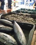 毎朝 魚市場までお出かけ 小魚やイカやエビ...いろんなものが並びます