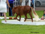 Août 2014 : Di One de Kergonan au championnat de France à Vichy
