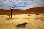 Arbres morts dunes de Sossusvlei - Namibie