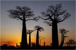 Coucher de soleil allée des baobabs - Madagascar