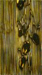 Trace-94  wood-cut (木版) 000×000mm