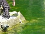 Angeln am Fischteich zu Au