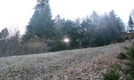 ...die ersten Sonnenstrahlen zwängen sich durchs Geäst
