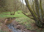Der Waldbach wurde in der Vergangenheit nicht begradigt und kann noch fließen wie er will.