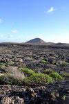 Lanzarote Lavafeld Nähe Tahiche