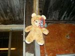 poor Teddy bear!!